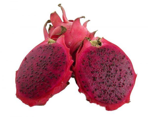 American Beauty Dragon Fruit Plant