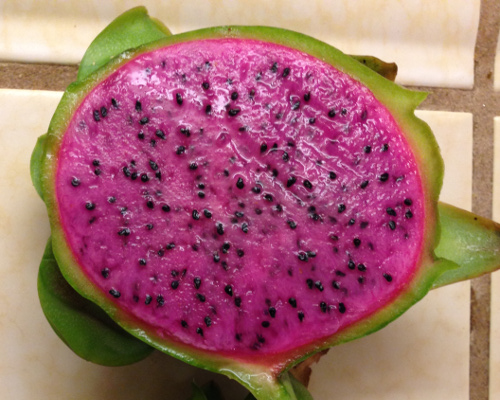 Edgars Baby Dragon Fruit