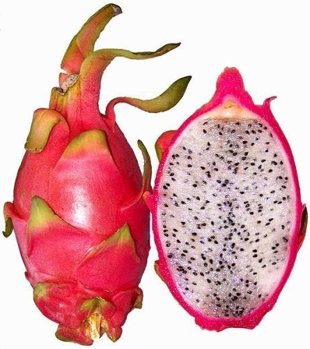 Vietnamese White Jaina Dragon Fruit